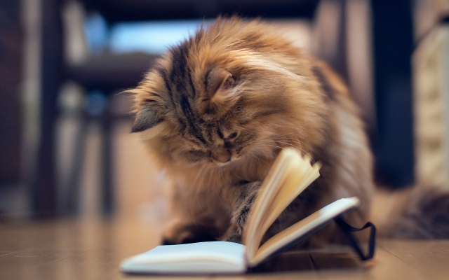 book-cat-1